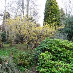 gardenserviceshaywardsheath