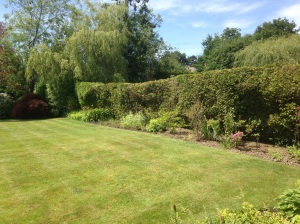 Lawn care Lindfield